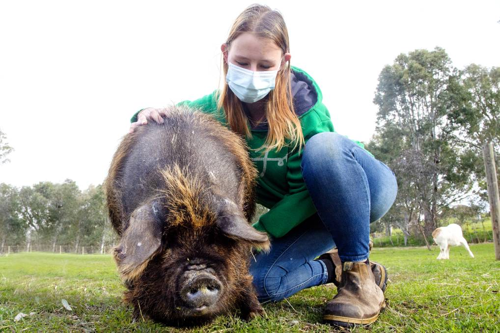 Catherine Peters with Ginny the pig, who needs an operation to dramatically improve her quality of life. Picture: DARREN HOWE